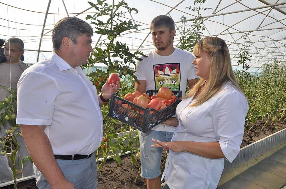 Сергей Москворецкий: «Помидоры радуют глаз!» Александр и Юлия Ванины из кооператива «Рассвет» продемонстрировали гостям выращенные овощи.