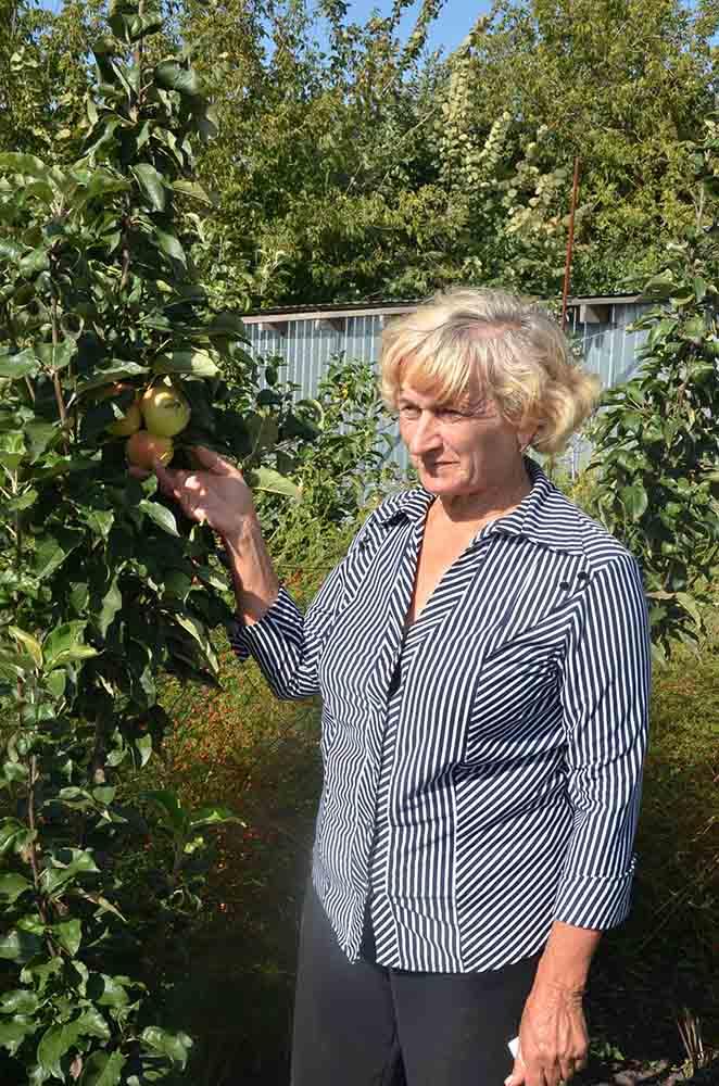 Надежда Владимировна (мама Александра и Дмитрия Майоровых) демонстрирует один из сортов яблок в своем саду.