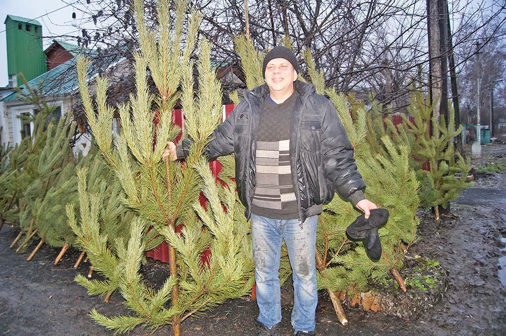 Сергей Жезленков торгует елками уже десять лет и как никто другой знает, на что обращать внимание, когда покупаешь главный новогодний атрибут.