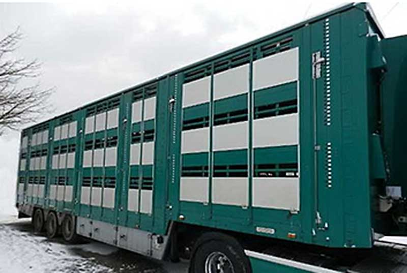 Доставка животных из Голландии осуществлялась на специализированном автомобильном транспорте.