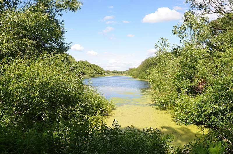 Вид с плотины на ручей у Поповского сада.