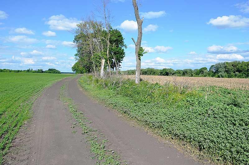 Тут когда-то была деревня Поповка. Здесь же стоял дом Евдокии Баскаковой. Сейчас от этого не осталось никаких следов. Распаханное поле и не убранная еще с прошлого года кукуруза...